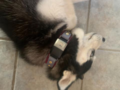 Sexy Beast Dog Collars Lakeside 1.5 Buckle Collar For Fi GPS Trackers Review