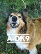 A-OK9 FLEXI-K9 - [1 POUCH SPECIAL AT 30% OFF!] Review