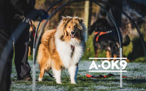 A-OK9 PROBIO-K9 - Multibuy - 3 Pouches Review
