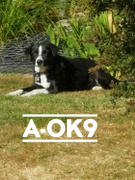 A-OK9 Calm-K9 Senior Boost Review