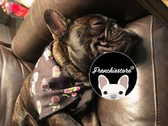 Frenchiestore Frenchiestore Dog Cooling Bandana | Sweet Ghost Review