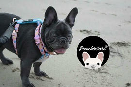 Frenchiestore Harnais ajustable de santé pour animaux de compagnie Frenchiestore | Examen de Pink StarPup