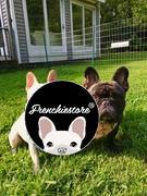 Frenchiestore Frenchiestore Hundekühlung Bandana   Livin 'La Vida Frenchie Bewertung