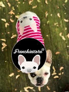 Frenchiestore Frenchie Shirt | Frenchiestore | Cream French Bulldog in Bubble Gum Review