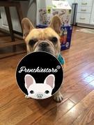 Frenchiestore Frenchiestore Reversible Hundegesundheitsgeschirr | 101 Dalmatiner Bewertung