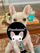 Frenchiestore Pettorina reversibile per la salute del cane Frenchiestore | Recensione di UniPup