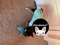 Frenchiestore Frenchie Shirt | Frenchiestore | Schwarze französische Bulldogge in Bumblebee Review