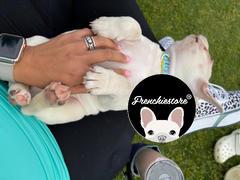 Frenchiestore Frenchiestore Breakaway Collar para perros | California Dreamin 'Review