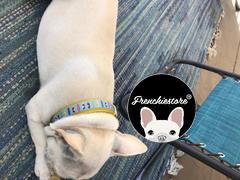 طوق الكلب الانفصالي frenchiestore frenchiestore | مراجعة كاليفورنيا دريمين