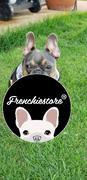Frenchiestore Frenchiestore Breakaway Hundehalsband | Mint StarPup Bewertung
