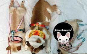 Frenchiestore Frenchiestore Breakaway Hundehalsband | Pink StarPup Bewertung
