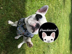 Frenchiestore Luxusleine | Mint StarPup Bewertung