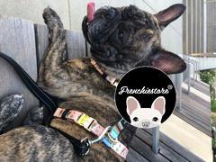 Frenchiestore Frenchiestore Verstellbares Tiergesundheitsgeschirr | Livin 'La Vida Frenchie Bewertung