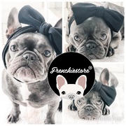 Frenchiestore Frenchiestore Pet Head Bow | Black Review