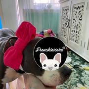 Frenchiestore Frenchiestore Pet Head Bow | Hot Pink Bewertung