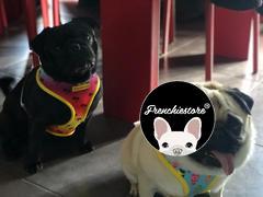 Frenchiestore Frenchiestore تسخير صحة الكلب العكسي | مراجعة كاليفورنيا دريمين