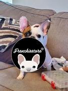 هودي Frenchiestore French Bulldog باللون الوردي | ملابس فرينشي | استعراض كريم فرينشي الكلب