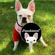 Frenchiestore Frenchiestore Reversible Dog Health Harness | Frenchie Love Review