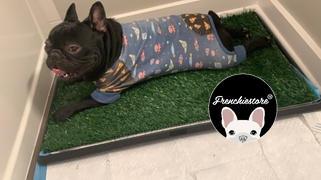 Frenchiestore Пижама с французским бульдогом | Frenchie Одежда | Детский обзор