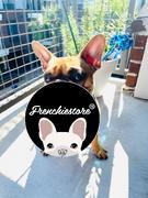 Frenchiestore Двусторонняя повязка для здоровья собак Frenchiestore | Livin 'La Vida Frenchie Обзор