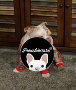 Frenchiestore French Bulldog Pyjamas | Frenchie Kleidung | Wild One Bewertung