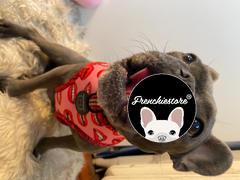 Frenchiestore Двусторонняя повязка для здоровья собак Frenchiestore | Губы и розы Обзор