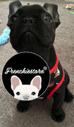 Frenchiestore Frenchiestore Reversible Hundegesundheitsgeschirr | UniPup Review