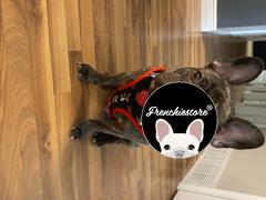 Frenchiestore Arnés reversible para la salud del perro Frenchiestore | Revisión de Apple