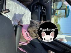 Frenchiestore Frenchiestore Hund Luxus Leine | Welpenliebe Bewertung
