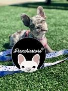 Frenchiestore Frenchiestore Hund Luxus Leine | 101 Dalmatiner Bewertung