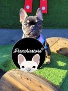Guinzaglio di lusso per cani Frenchiestore Frenchiestore | Black Varsity Review