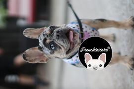 Frenchiestore Frenchiestore Reversible Hundegesundheitsgeschirr | Livin 'La Vida Frenchie Bewertung