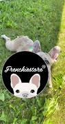 Frenchiestore Frenchiestore الكلب تبريد باندانا | استعراض قنبلة البوب العكسي
