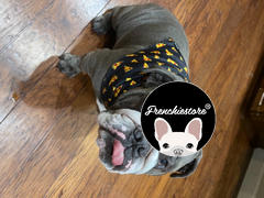 Frenchiestore Frenchiestore الكلب تبريد باندانا | مراجعة سنة جديدة سعيدة