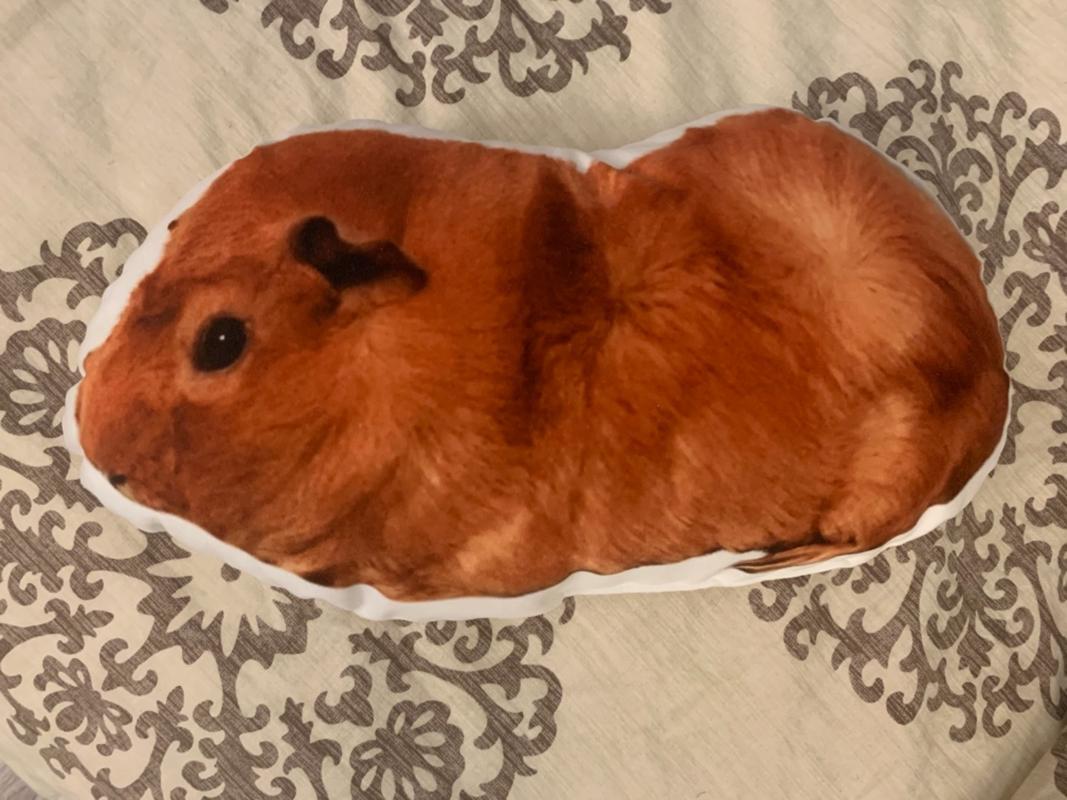custom guinea pig pillow