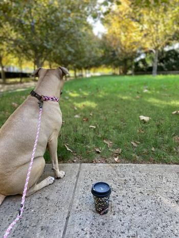 Native Collars Multi-Functional Leash Light-weight Review