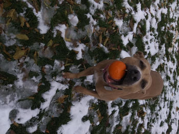 Monster K9 Dog Toys ULTRA DURABLE Solid Ball Review