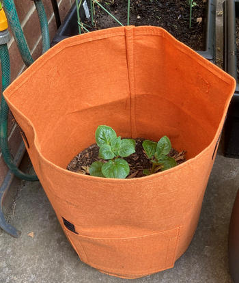 Aussie Gardener Potato Planter Bags - The easy way to grow potatoes at home - BACK IN STOCK Review