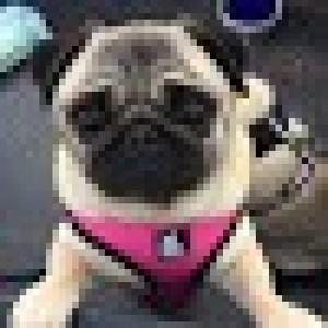 A Kazoo Pet Co Customer