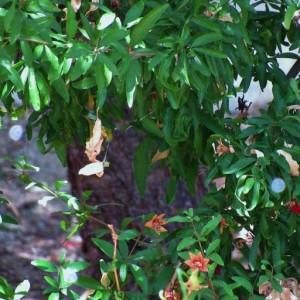 A Pinetree Garden Seeds Customer