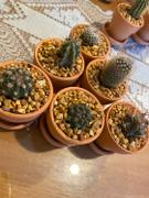 Planet Desert 2 inch assorted cactus 12 pack Review