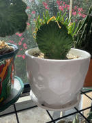 Planet Desert Cactus Mix Soil Blend Review