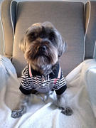 DinkyDogClub Max's Closet Black & White Striped Dog Polo Shirt Review
