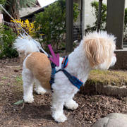 Gooby Convertible Harness Review
