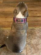 Pit Bull Gear W52 - 2 Name Plate Spiked Leather Collar Review