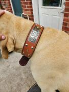 Pit Bull Gear N5 - 2 Name Plate Tapered Dog Collar w/Studs Review