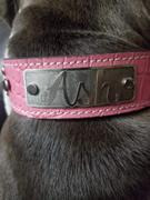 Pit Bull Gear N11 - 1 1/2 Name Plate Leather Dog Collar w/Gems Review