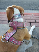 Pit Bull Gear N14 - 1 1/2 Name Plate Spiked Leather Dog Collar Review