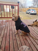 Pit Bull Gear DON'T HATE ME BECAUSE YOU'RE A DOUCHEBAG - ZIPPER DOG HOODIE Review
