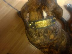 Pit Bull Gear WN4 - 2 Name Plate Bucket Studded Leather Dog Collar Review